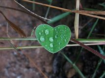 Love leaf. stock photography