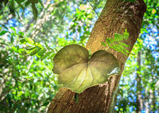Love Leaf Valentine Stock Photo