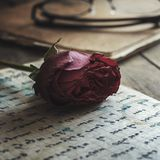 Love letter and rose Stock Photos