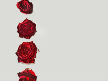 Love letters - rose border. Four roses on a row as a border on a grey love paper letter Stock Image