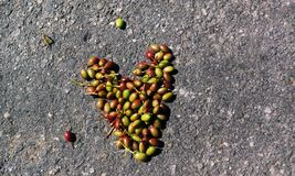 Love of a Life. Berry is structered in heartshape on the road stock photos