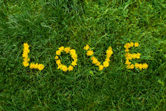 Love like a flower Royalty Free Stock Images