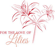 Love Of Lilies Royalty Free Stock Photo
