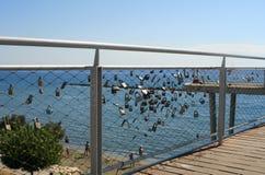 Love locks on a seaside bridge royalty free stock image