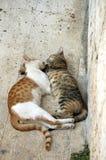 Love,love,love. Sleeping cats Stock Photography