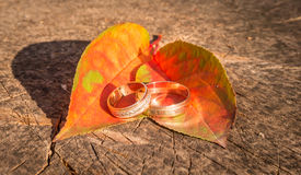 Love and loyalty. Beautiful wedding rings Royalty Free Stock Image