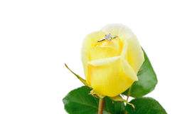 Love and marriage. A yellow rose with a diamond engagement ring Stock Images
