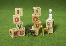 Love me love my dog alphabet blocks. On the green background Royalty Free Stock Images