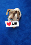 Love Me Miniature Dachshund Sign Royalty Free Stock Photo
