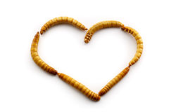 Love mealworms royalty free stock images