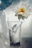 Love melts the ice! Royalty Free Stock Image