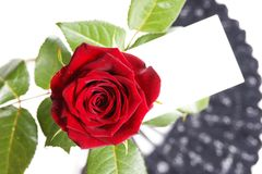 Love message. Single red rose with love note paper. Put your message on it Royalty Free Stock Images