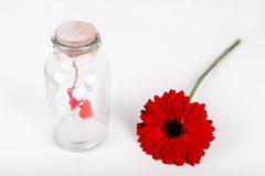 Love message in a bottle. Roll of white paper with red thread and red gerbera flower on a white background. Saint Stock Photos