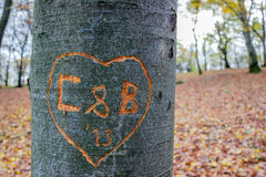 Love message carved into tree Royalty Free Stock Images
