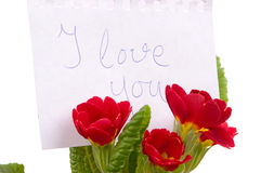 Love message in the primroses Stock Photo