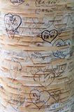 Love Messages Carved on the Tree in Lover`s Lane, Green Gables Heritage Place Stock Image