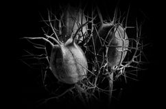 Love in a mist. A metaphor in black and white. An abstract world. Love in a mist Stock Photography