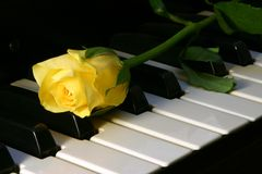 Love of music. Yellow rose on top of paino Royalty Free Stock Photos