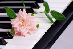 Love Of Music. A pink rose lying on the keys of an electronic piano Royalty Free Stock Photography
