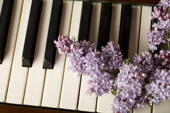 Love of Music - purple lilac Stock Image