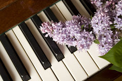 Love of Music - purple lilac Stock Photo
