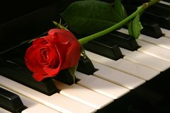 Love of Music - red rose Royalty Free Stock Photos