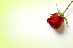 Love my heart rose Royalty Free Stock Photo