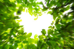 Love nature concept Royalty Free Stock Image