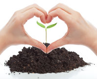 Love for nature concept. With seedling and woman hands Royalty Free Stock Image