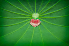 Love of nature. Royalty Free Stock Image