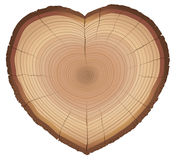 Love Nature Wood Rings Heart Shaped Symbol Royalty Free Stock Photography
