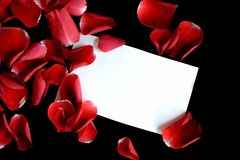 Love Note. Red rose petals scattered across a black background with a white notecard amidst the petals Royalty Free Stock Photos