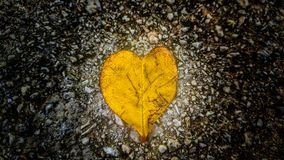 Love. One leaf love Stock Images