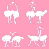 In love ostriches Royalty Free Stock Images