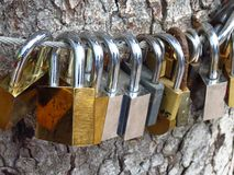 Love padlocks. Hanging on a tree Stock Images