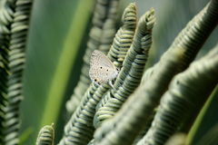 Love is a peaceful feeling, like a flower hugging a butterfly Royalty Free Stock Images