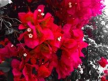 Love Petals Royalty Free Stock Photography