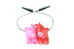 Love of pigs Stock Images