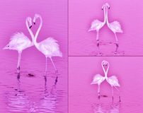 Love is pink Royalty Free Stock Photos
