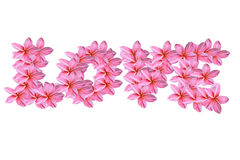 Love pink frangipani flowers Stock Images