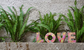 Love plants in front of a wall. A photograph of the word love with plans and a wall Stock Photography