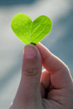 Love in the Plants Stock Photography