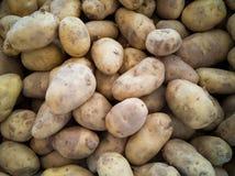 Love Potato stock photography