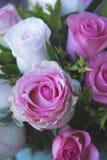 Love present pink rose flowers stock photos