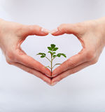 Love and protect nature Royalty Free Stock Photos