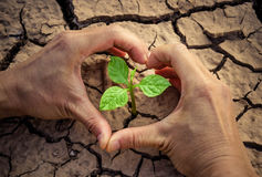 Love and protect nature. Hands forming a heart shape around a tree growing on cracked ground. Save the world. Environmental problems. Growing tree Stock Images