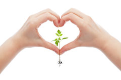 Love and protect nature and life. Concept with woman hand holding young seedling stock photos