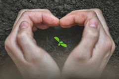 Love and protect nature. Woman Hands forming a heart shape around a small plant. Ecology and care concept.