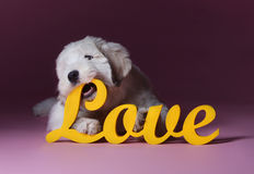 Love puppy dog Stock Photos