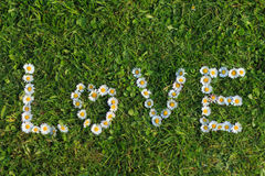 Love Quote of Daisy Flowers Royalty Free Stock Images